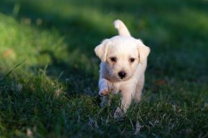 what to prepare before getting a dog