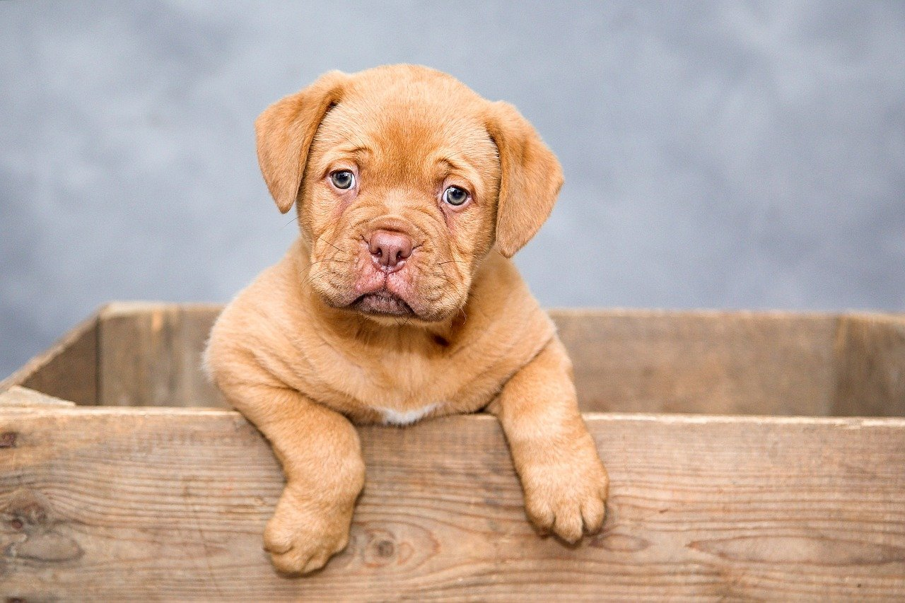 What Dog Breed Fits You Best